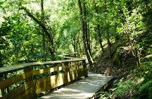 Paiva walkways: a beautiful riverside hike