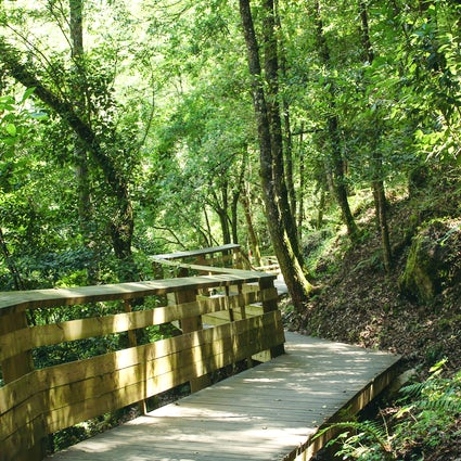 Paiva walkways: a beautiful riverside hike