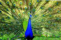 Zoológico y exotarios de Ereván