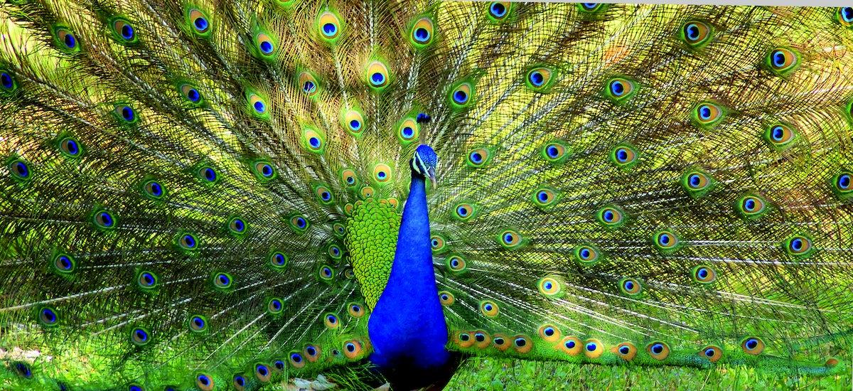 Yerevan Zoo & Exotariums