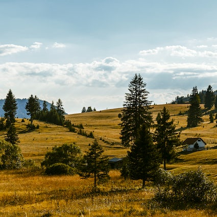 Vacation at Mt. Zlatibor, nature with the comfort of a city