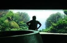 Lisbon Oceanarium - Forests Underwater