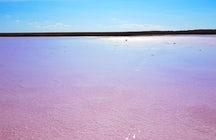 El descubrimiento más reciente de Kazajstán: Lago Kobeituz rosa