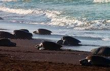 Meeresschildkröten: Ein einzigartiges Erlebnis in Costa Rica