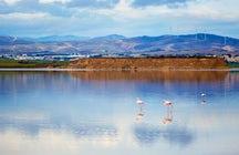 """Trip """"nature et vie sauvage"""" à Larnaca"""