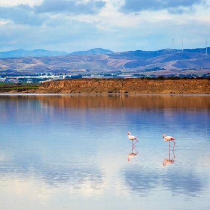 "A ""nature & wildlife"" trip in Larnaca"