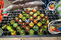 Alasitas, the Bolivian miniature market