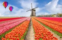 Daytrips around Amsterdam; canals, tulips, bikes and windmills!