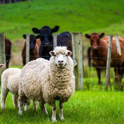 Experience authentic Slovak farm life in salaš and koliba