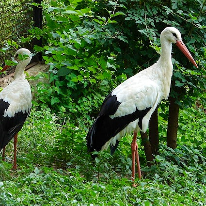 Find your harmony in the Zoo of Chisinau
