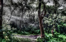 Be afraid in the Baciu Hoia Forest near Cluj-Napoca