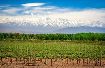 The best of Mendoza Province: the land of sun & wine
