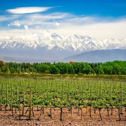 Das Beste der Provinz Mendoza: das Land der Sonne und des Weins