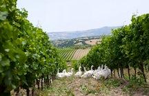Las rutas del vino en Cerdeña: Tenuta Olianas