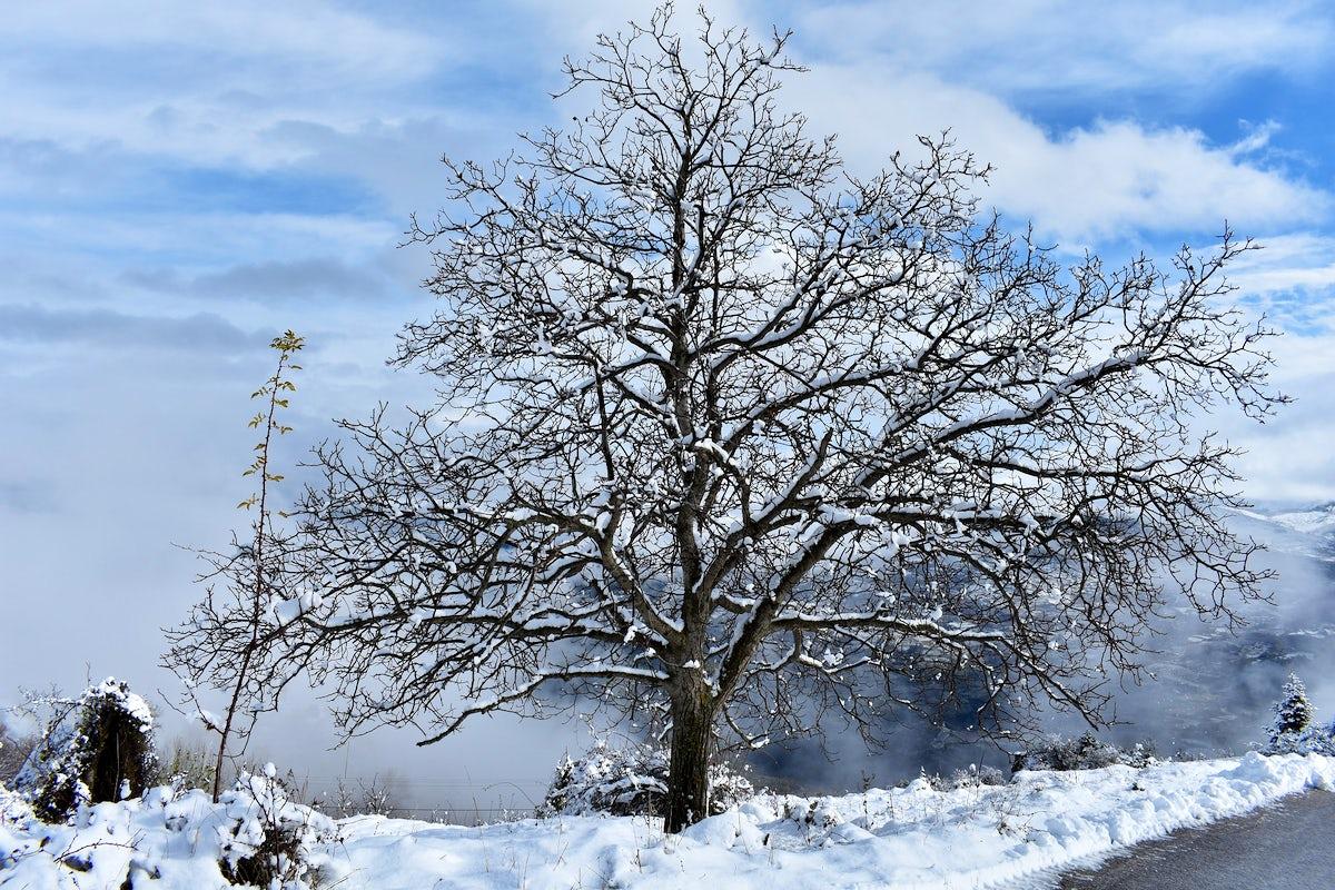 Snowy vibes in Trikala Corinthias - Greece