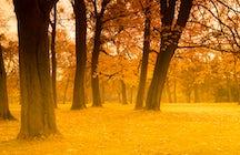 Golden autumn in Deer Streams Nature Park in the Urals