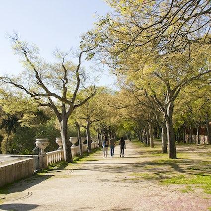 A forest within Lisboa - Tapada das Necessidades