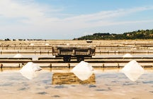 Sečovlje Saltworks: Where a manual salt collection still lives