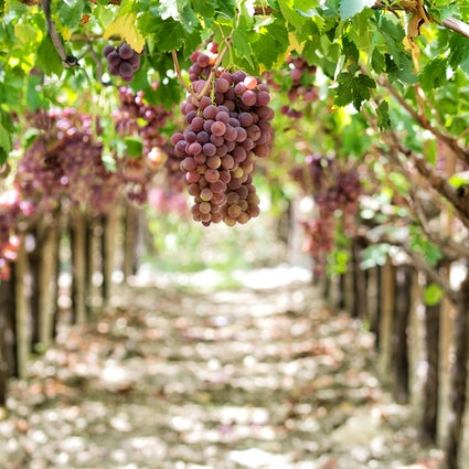 Everything you need to know about Slovak wines