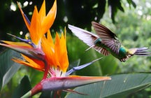 Spectacular birds, blooms, & beauty: 3 Costa Rican gardens