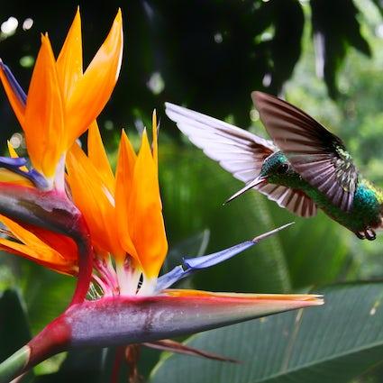 Pájaros espectaculares, flores y belleza: 3 jardines costarricenses