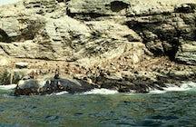 Punta de Choros, o paraíso da vida selvagem do Chile