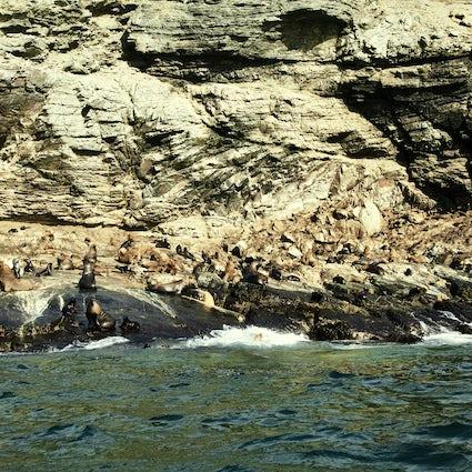 Punta de Choros, Chiles Tierparadies für Wildtiere