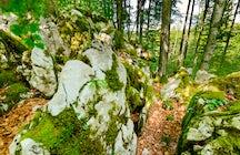 Erkunden Sie die versteckten Wälder von Kočevsko