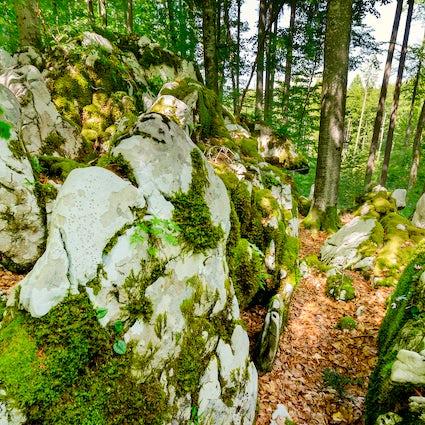 Explorando los bosques ocultos de Kočevsko