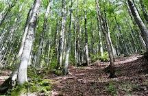 Pietraporciana, una reserva natural en Toscana