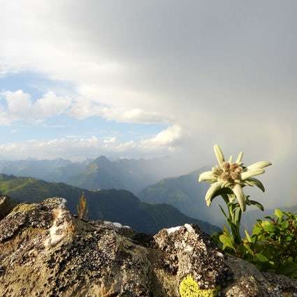 Visitar Bohinj: Festival internacional de flores silvestres