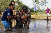 Besessen von Büffeln: Kebo-keboan-Zeremonie in Banyuwangi, Ost-Java