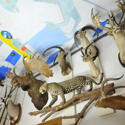 Museums in Paris: Museum of Hunting and Nature