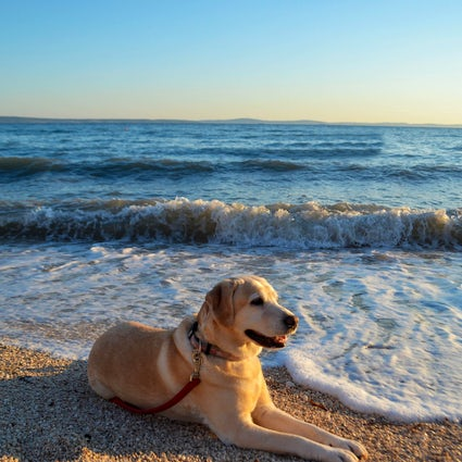 The best holidays for dogs in Croatia