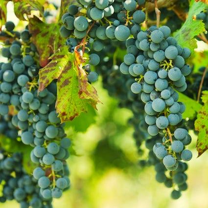 Wine cellars tour in Franciacorta