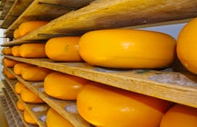 A cheesy experience! Discover the Dutch cheese markets