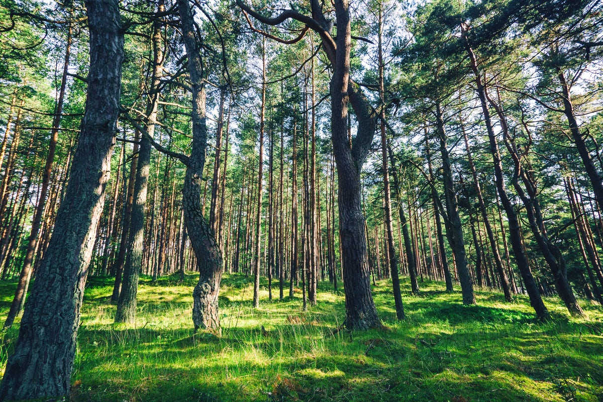 Get into the wild in the Lithuanian National Parks