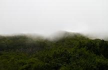 A Trip to Madeira - Balcões