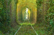 Take Instagram-worthy pictures in Obreja's Tunnel of Love