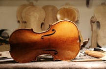 How Bosnian maple connected Stradivari violin & Mt. Konjuh