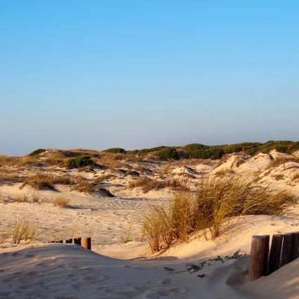 São Jacinto - beach, forest and dunes