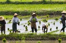 Nyaungshwe e il lago Inle: l'autentico Myanmar al suo meglio