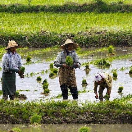 Nyaungshwe & Inle See: authentisches Myanmar vom Feinsten