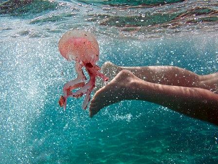 Swim with stingless jellyfish in Indonesia with Mark