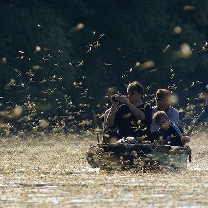 Unglaubliches Naturphänomen des blühenden Flusses Tisa