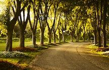 Explorando los arboretos en Armenia