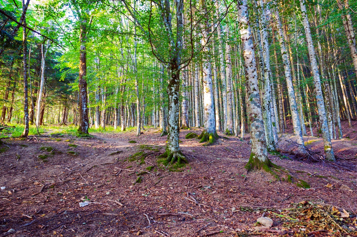 Italian Forest: Casentino National Park
