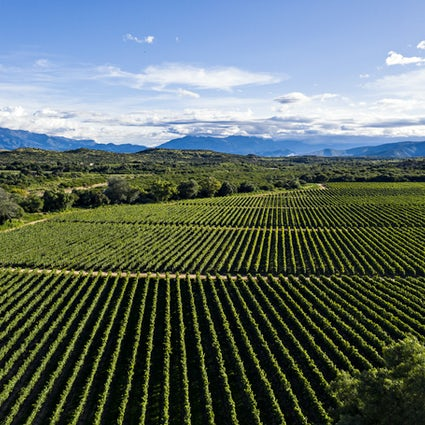 Enotourisme in Tarija, veel meer dan wijn