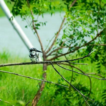 Ein Tag im Vogelschutzgebiet Nal Sarovar in Gujarat