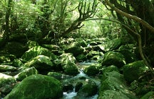 Yakushima mystical woodland: inspiration for Princess Mononoke anime